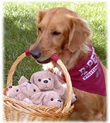 Tessa all ready for a visit. She was an active participant in Rx Pets. http://www.prescriptionpets.org/ She often carried a basket of fun while cheering people.