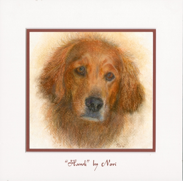 Golden retriever protrait