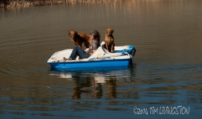 retrievers_boat05_090