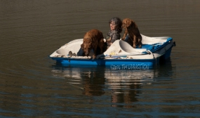 retrievers_boat06_092