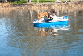 retriever_boat12_212