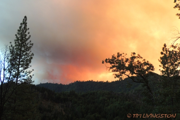 wildfire, forest fire