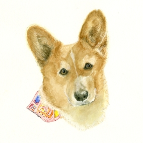 The final watercolor of Callie. Dr. Jean's Welsh Corgi