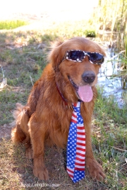 Golden retriever 4th of July.