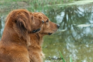 Gracie and Sailor watch ducks on the big pond.