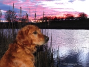 Sailor in a late winter sunset with ducks on the pond at our place.