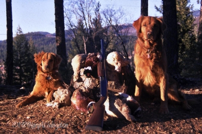 1989 - Great-great-great-Granddam, Kate, 6-months-old, after a pheasant hunt with Bo. (great-great-great-grandsire)
