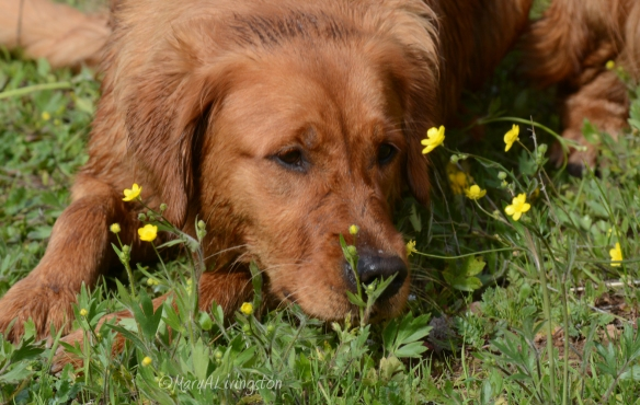 Taking time to smell the flowers.