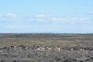 We enjoyed the antelope in both Idaho and Montana.