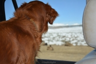 Sailor watched the scenery, especially when beasts were about.