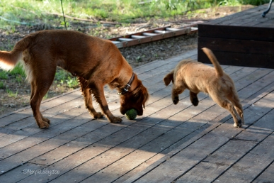 Phanny is determined to snatch the ball from Tasha.
