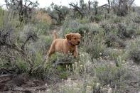 Phanny in the Idaho desert before crossing into Nevada.
